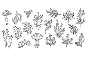 Leaves, acorns and mushrooms
