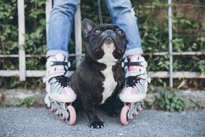 French bulldog urban outdoors