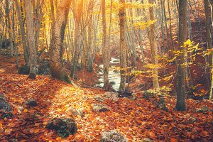 Colorful autumn forest at sunset