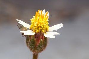 Macro white flower