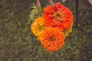 Rustic Orange Gerbera Daisy #1
