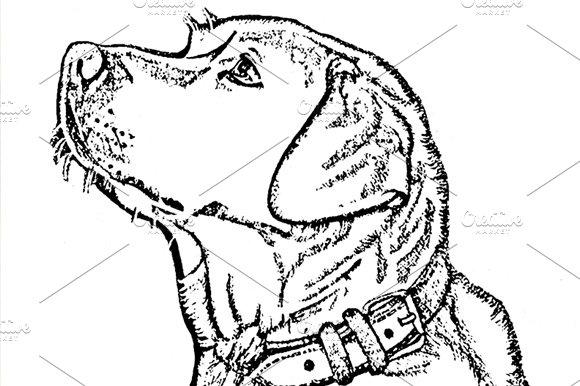 Labrador pyrography pattern illustrations creative market pronofoot35fo Choice Image