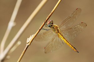 Image of dragonfly.