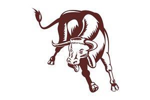 Texas Longhorn Bull Charging