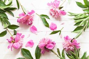 Bright fresh pink summer peonies