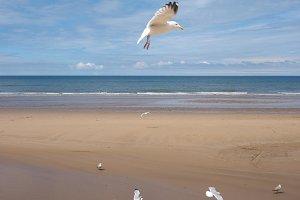 Seagull bird animal