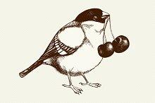 Hand drawn bird sketch with cherry