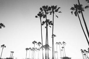 Venice Beach / Los Angeles Californi