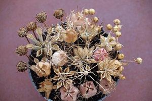 wild dry bouquet