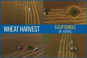 Wheat Harvest: 6 Video Clip Bundle