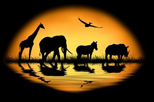 Animal on sunset background