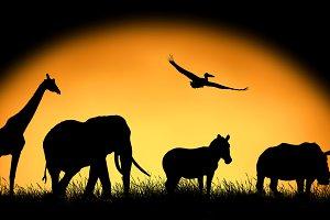 Animal on sunset background