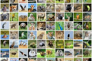Collage of 100 photos of wildlife