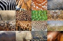 Real wild animal skin