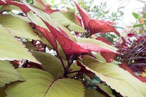 Big plant leafs