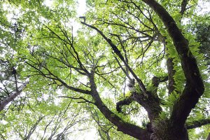 Tree standing still in a rainforest