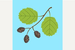 Alder twig with leaves and cones