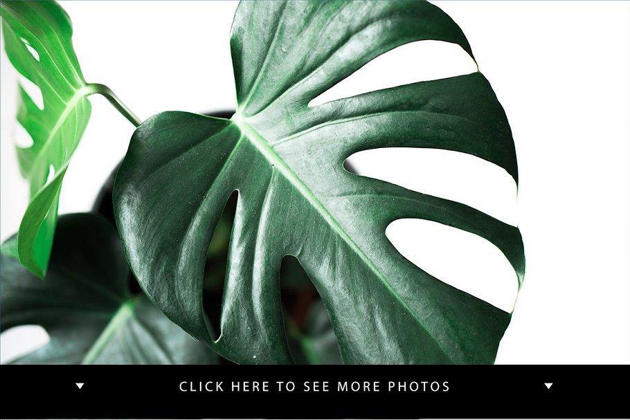 4 Green monstera stock photos