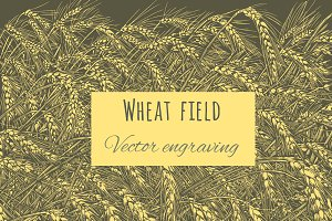 Wheat field . Vector engraving.