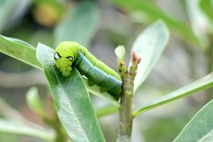 Image of green caterpillar