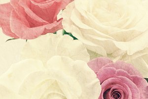 sweet color rose