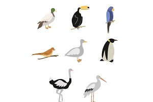 Cartoon Birds vector set
