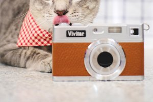 Cute tabby kitten with camera