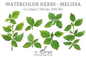 Watercolour Herbs - Melissa