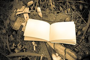 diary and notebook on tree