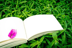 diary and notebook on grass