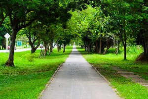 walkway park and trees