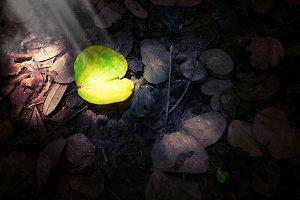 green leaf in the dark