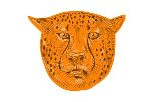 Cheetah Head Drawing