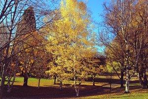 Beautiful park in Autumn