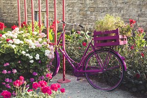 Pink bike in the garden