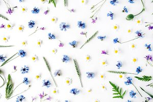Floral background with cornflowers