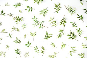 Floral background with branches