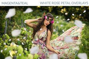 White Rose Petal Overlays