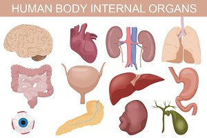 Human body internal organs set.