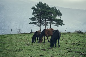 Horses in the pastures