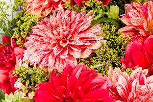 Bouquet of red dahlias