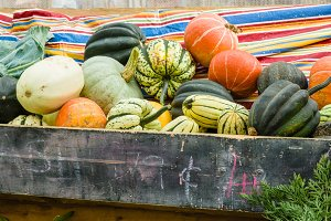 Winter squash on display