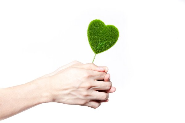 Human hands holding tree in heart-s…