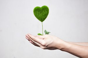 Human hands holding tree in heart-shape in white isolated background - ecology and environment concept