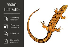 Realistic gecko lizard