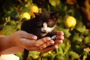 small cat in hand