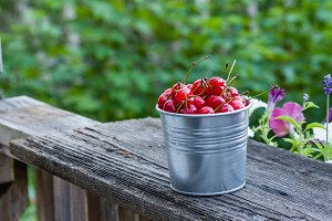 Metal bucket of sour pie cherries