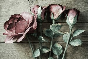 roses vintage style