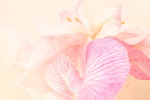 soft flower background
