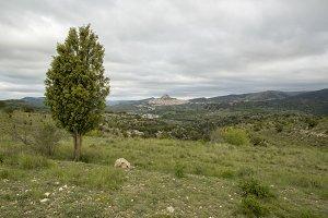 Tree and Morella